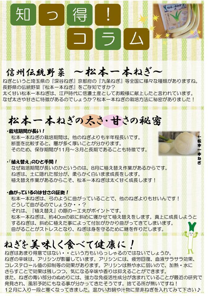 12月栄養コラム  松本一本ねぎ.jpg